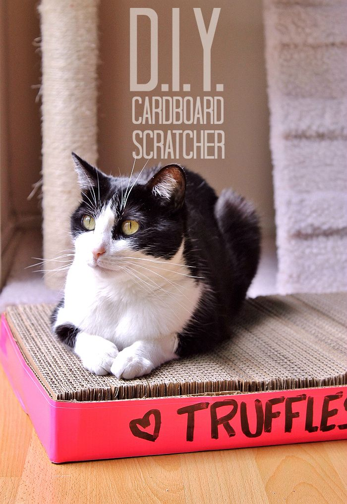 D.I.Y. Cardboard Cat Scratcher Tutorial  Easy And Almost Free! #IAMSCat (AD)