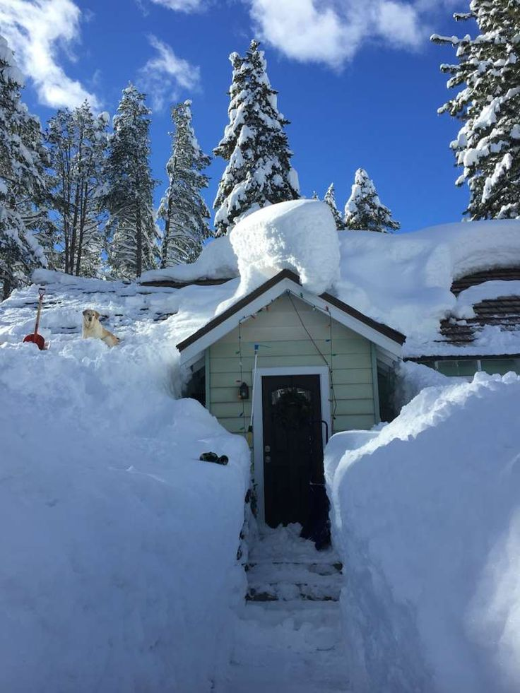 Snow piled up on a house in Truckee, Calif., in February 2017. Notice the dog on the roof.  Photo: Courtesy Chris McGinnis
