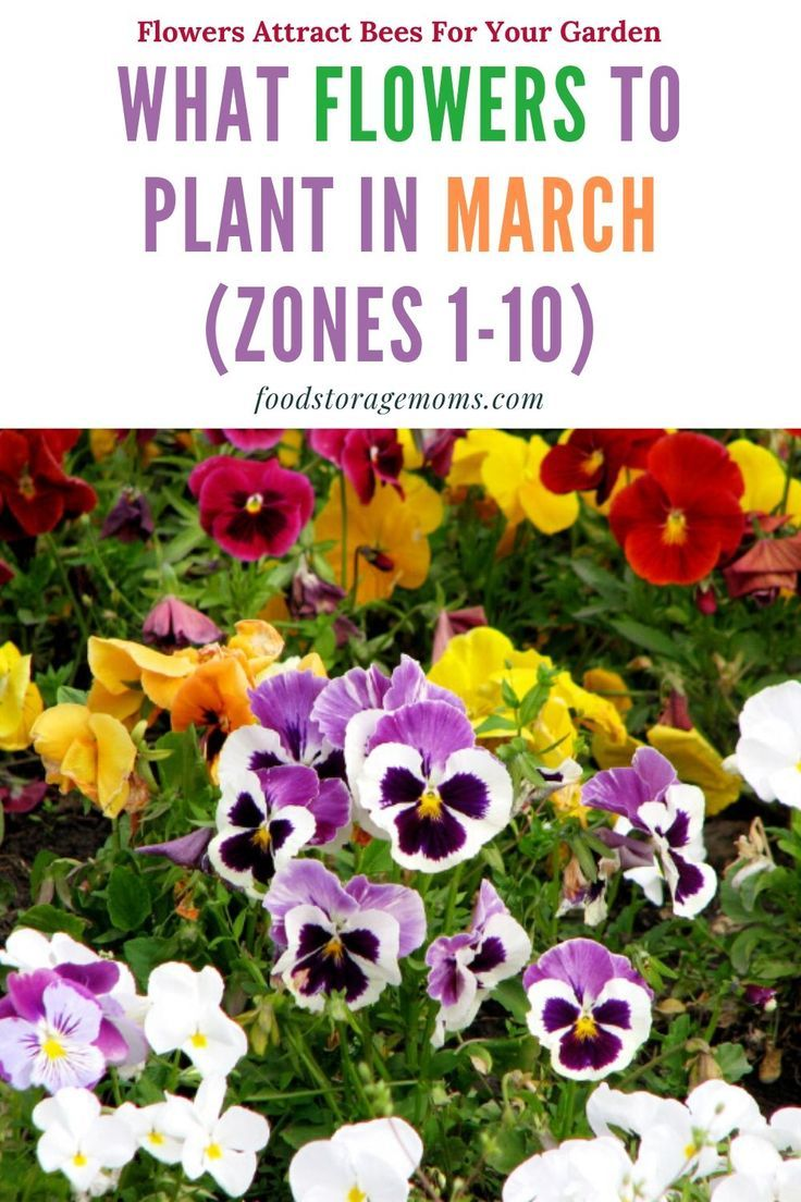 What Flowers To Plant In March Zones 1 10 Planting Flowers From Seeds Flower Planting Guide Planting Flowers