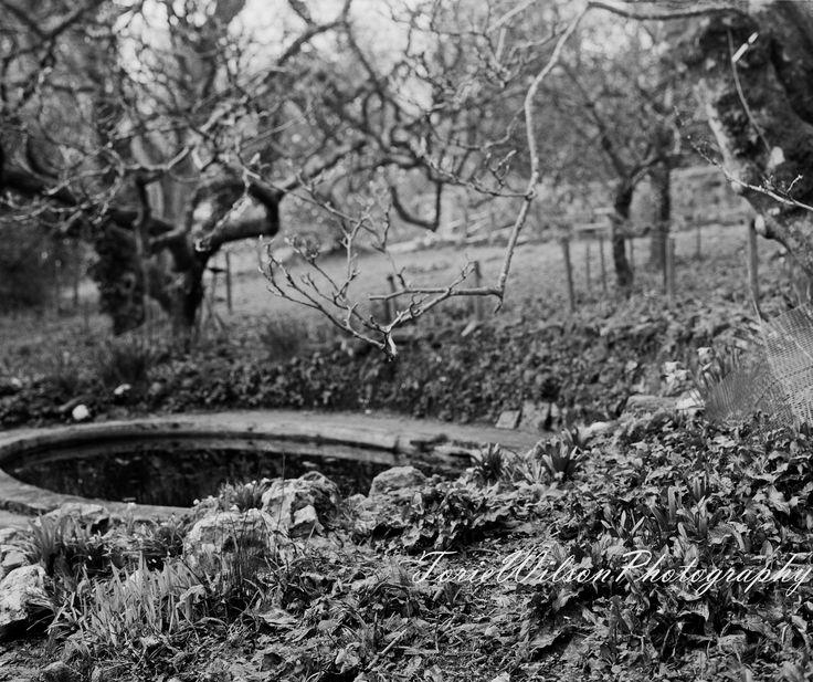 Walled Garden, Tremough Campus. 5x4 Large Format Camera.