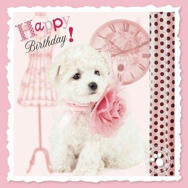 Birthday pup