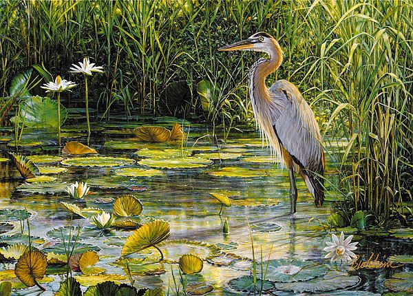Great Blue Heron by Greg Biolchini