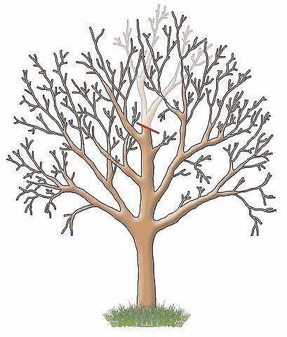 Обрезка садовых деревьев