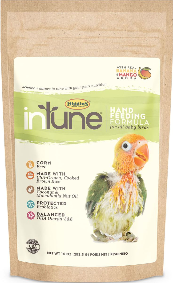 Birds intune hand feed formula for all baby birds by