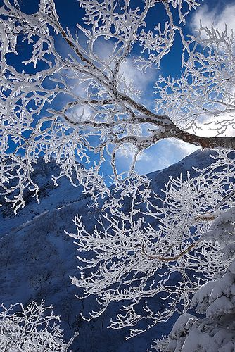 Ice coated trees in the morning light, Japan