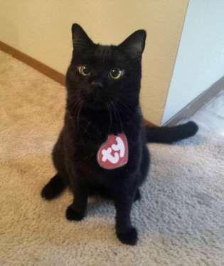 The rarest Beanie Baby of them all! Black Cat Beanie Baby