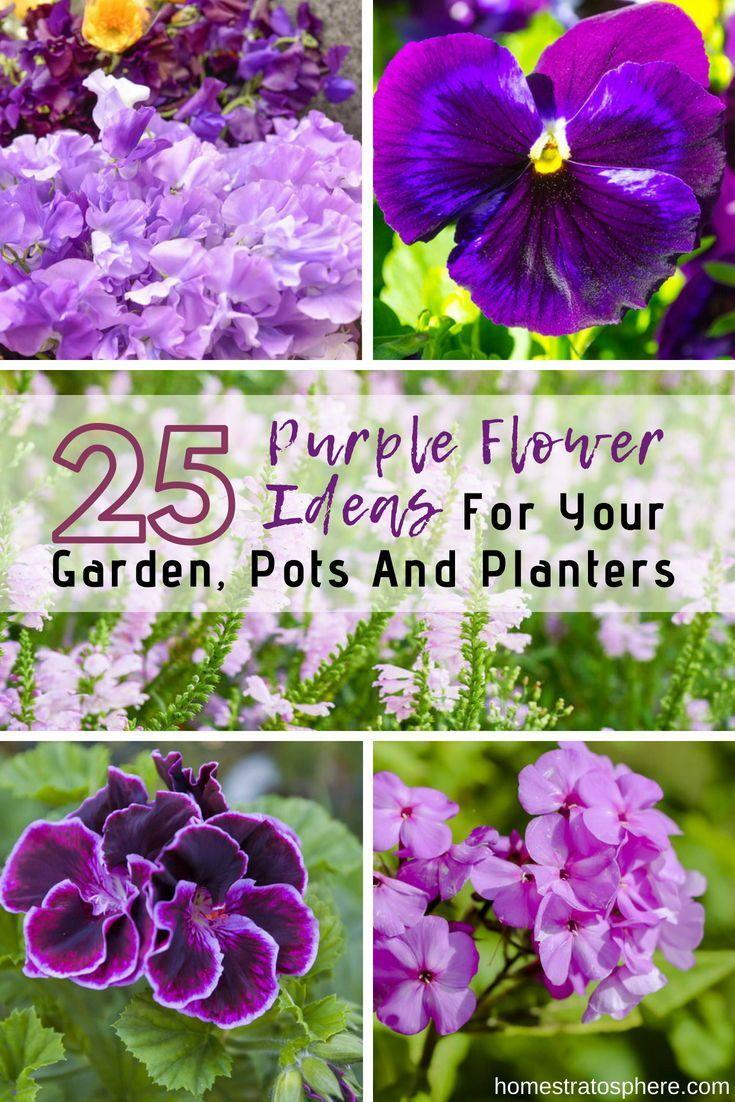 25 Purple Flower Ideas For Your Garden Pots And Planters Purple Flowers Garden Flower Garden Design Purple Garden