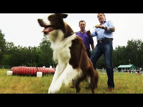 Hundeerziehung: Nie wieder gespannte Leinen! - YouTube