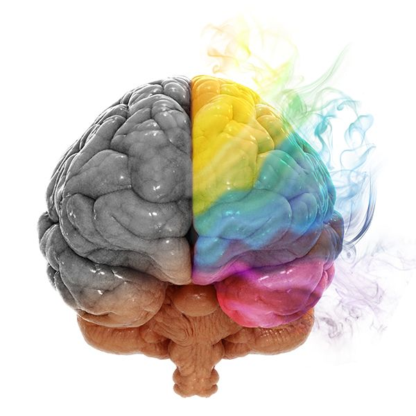 left brain right brain research paper The article in which i chose to examine is called right brain, left brain: fact and fiction, written by jerre levy in the past fifteen years or so.