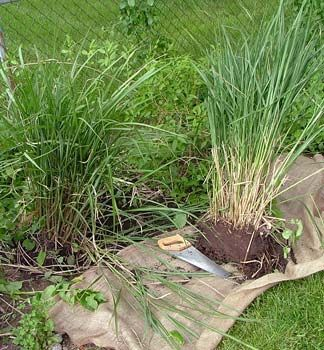 Best 25 Ornamental grass landscape ideas on Pinterest