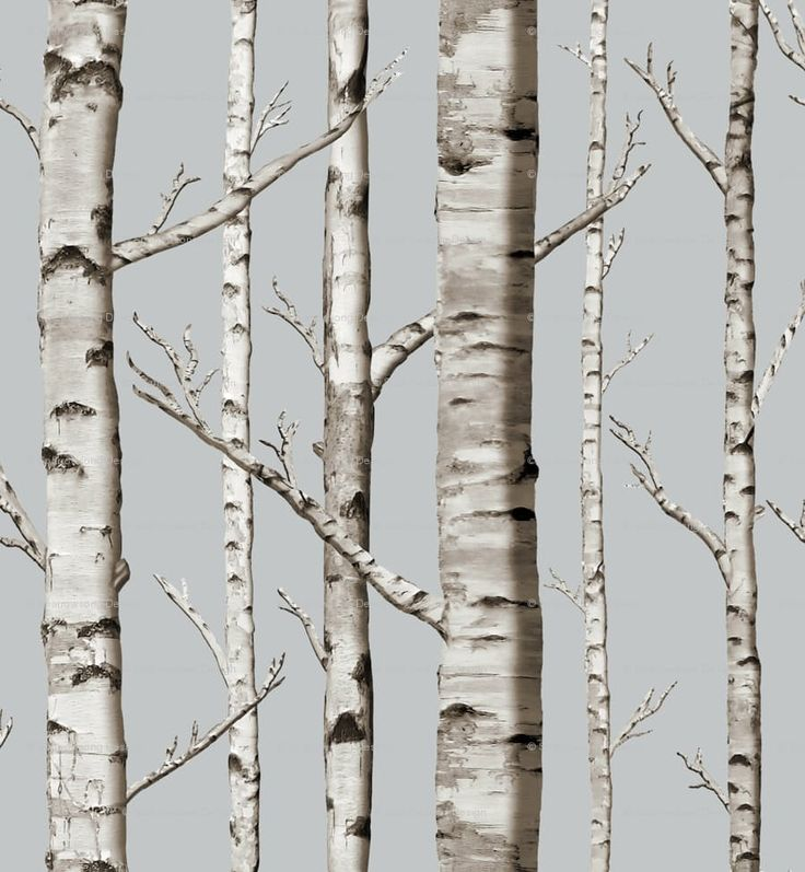 The gallery for --> White Birch Tree Wall Decals