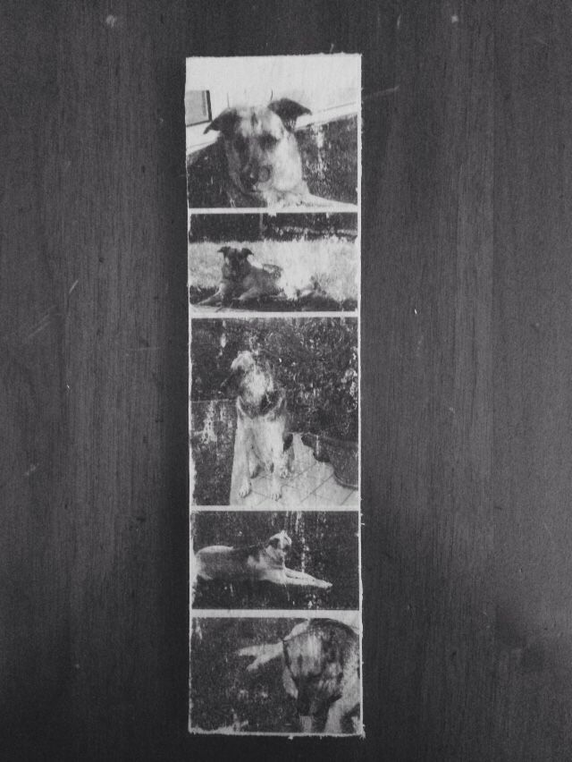 Photo transfer in a slab of wood.