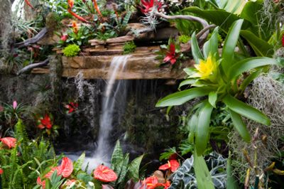 "tropical landscaping ideas | Restorer of Streets with Dwellings."" Isaiah 58"