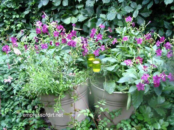 30 creative garden container ideas - Unique container gardening ideas ...
