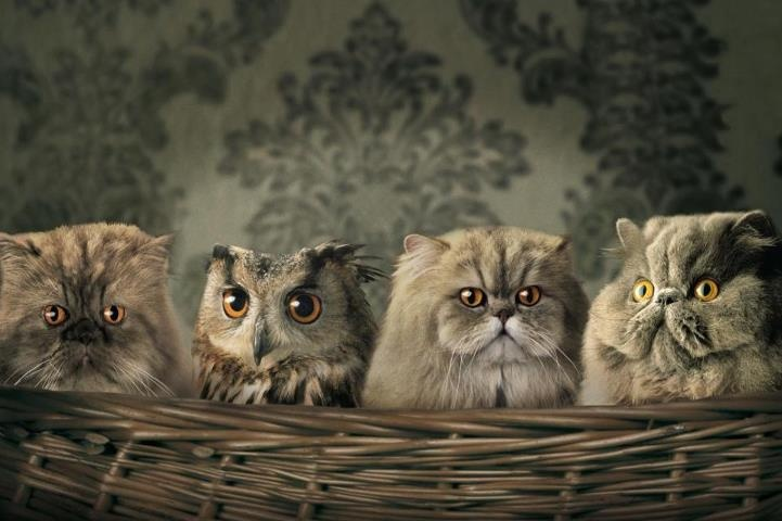 of owl and cats: Picture, Cats, Animals, Pets, Funnies, Things, Funny Animal, Photo, Owls