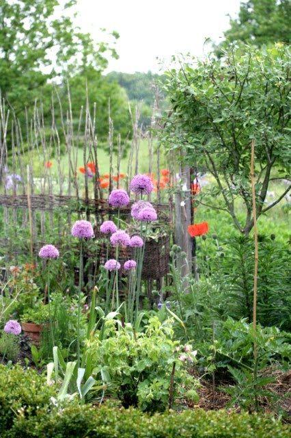 Kitchen Vegetable Garden   jardin potager   bauerngarten   köksträdgård
