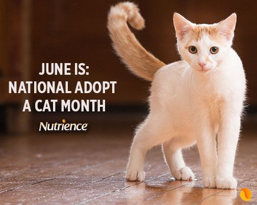 Please adopt. There are lots of cats who need a loving home.