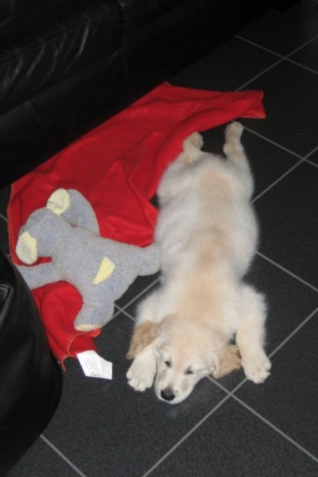 15 best avid dog lover images on pinterest doggies dog for Avid dog