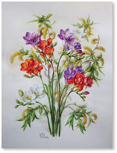 """Freesia and willow watercolor 15.6""""x11.8"""", 2014; 200$"""