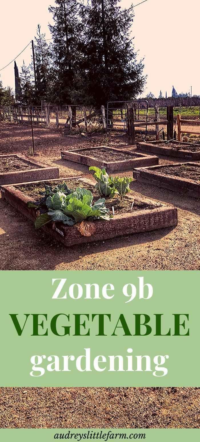 Gardening In Arizona When To Plant