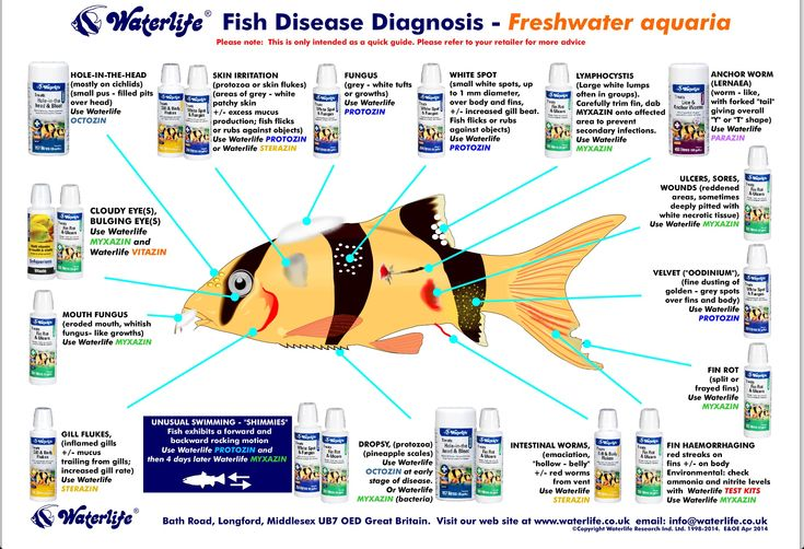 Fish disease chart fish tank information diy ideas for Fish diseases pictures