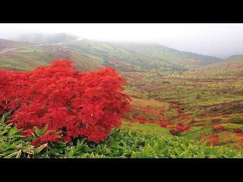 Winter to beautiful Shiga Kogen · 4K shooting from autumn – haruyuki onoue … | Bear Tales