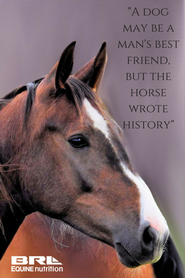 Pics photos quote i wrote for my horse com account s equestrian - Find This Pin And More On Inspirational Horse Quotes And Horse Ideas