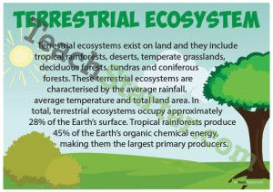Terrestrial Ecosystems Poster