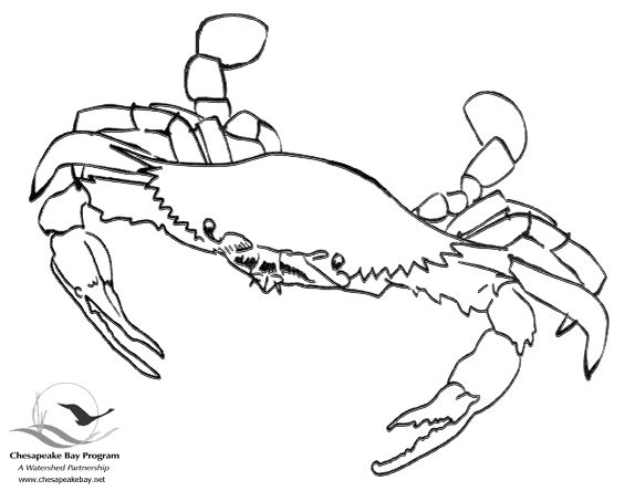 chesapeake bay coloring pages - photo#5