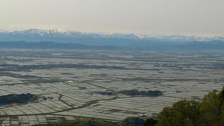 弥彦山から三条、燕、弥彦を望みました。 残雪、湖に見紛う水田、新緑、ホトドギス・・・ 癒されます。