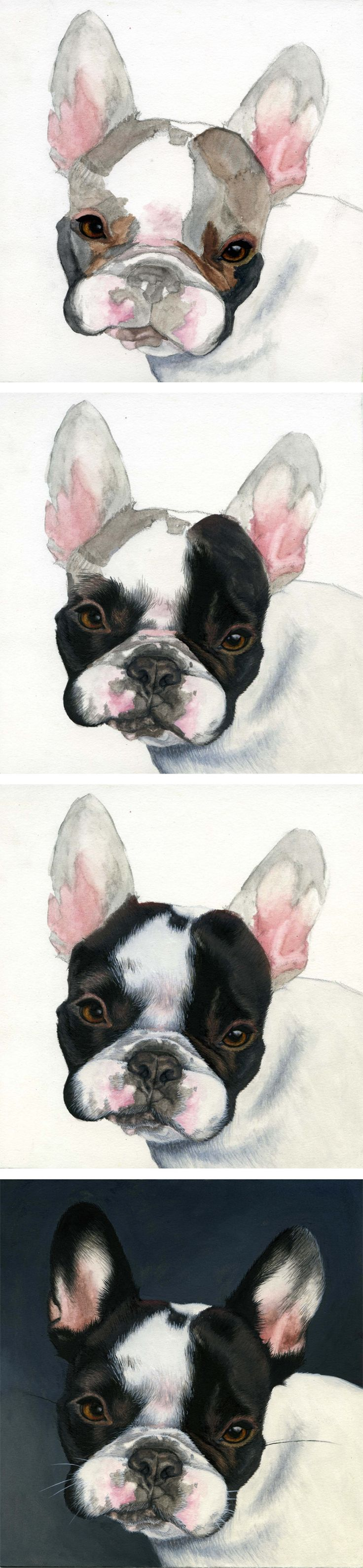 This is Henry, a French Bulldog puppy. The progression of my gouache painting as it went from a simple sketch to the finished work of art. To have a portrait painted of your pet, visit leahdaviesart.com