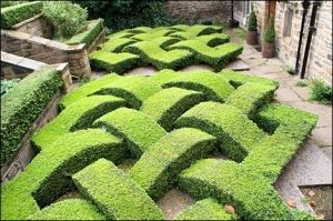 There's a challenge for you! boxwood garden maze