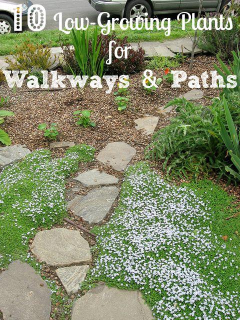10 Low Growing Plants To Consider Next To Garden Walkways