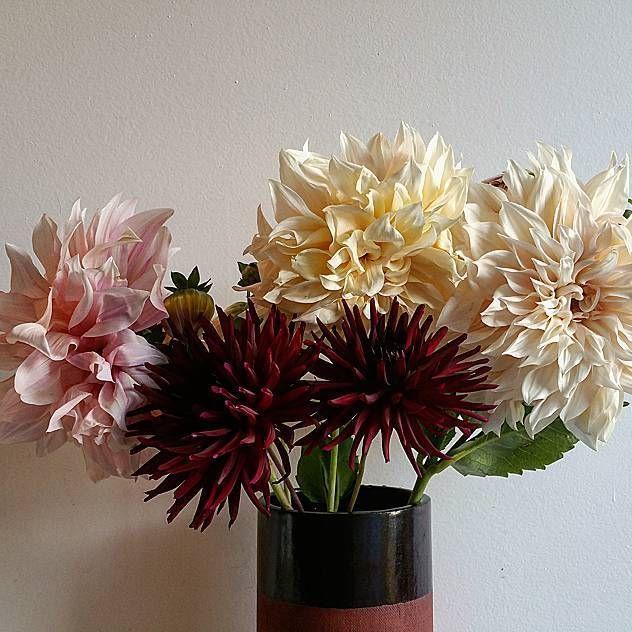 garden to Gallery dahlias 😍 #endofseason #dahlia #gardentogallery #locallygrown #buylocal #smallscaleflowerfarmer #bloomroomvancouver #bloomroombotanicalgallery #eastvanflorist #mountpleasantflorist #fraserhoodflorist #vancouverflorist #eastvan #mountpleasant #fraserandkingsway #fraserhood #vancouver #yvr #oscarandkennedyceramics #oscarandkennedy #locallymade #madeineastvan