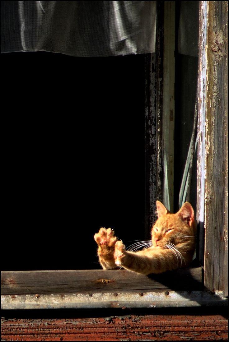 peaceful eye — mostlycatsmostly: (via ya-arven2)
