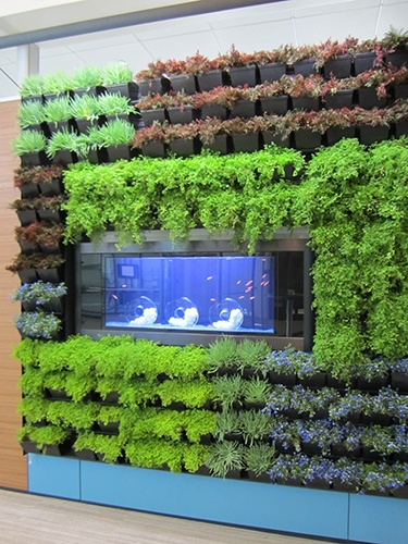 17 best images about dirtt on pinterest receptions for Green wall system