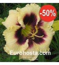Hemerocallis Piano Man - Eurohosta