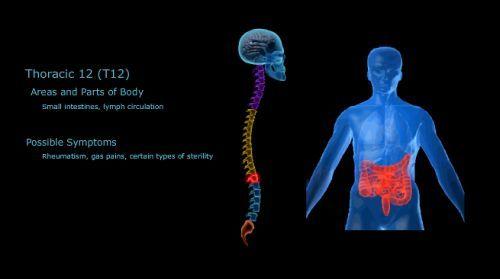 Duceti mouse-ul peste oricare dintre vertebre la nivelul coloanei vertebrale umane de mai jos pentru a afla modul în care fiecare vertebra este conectata la