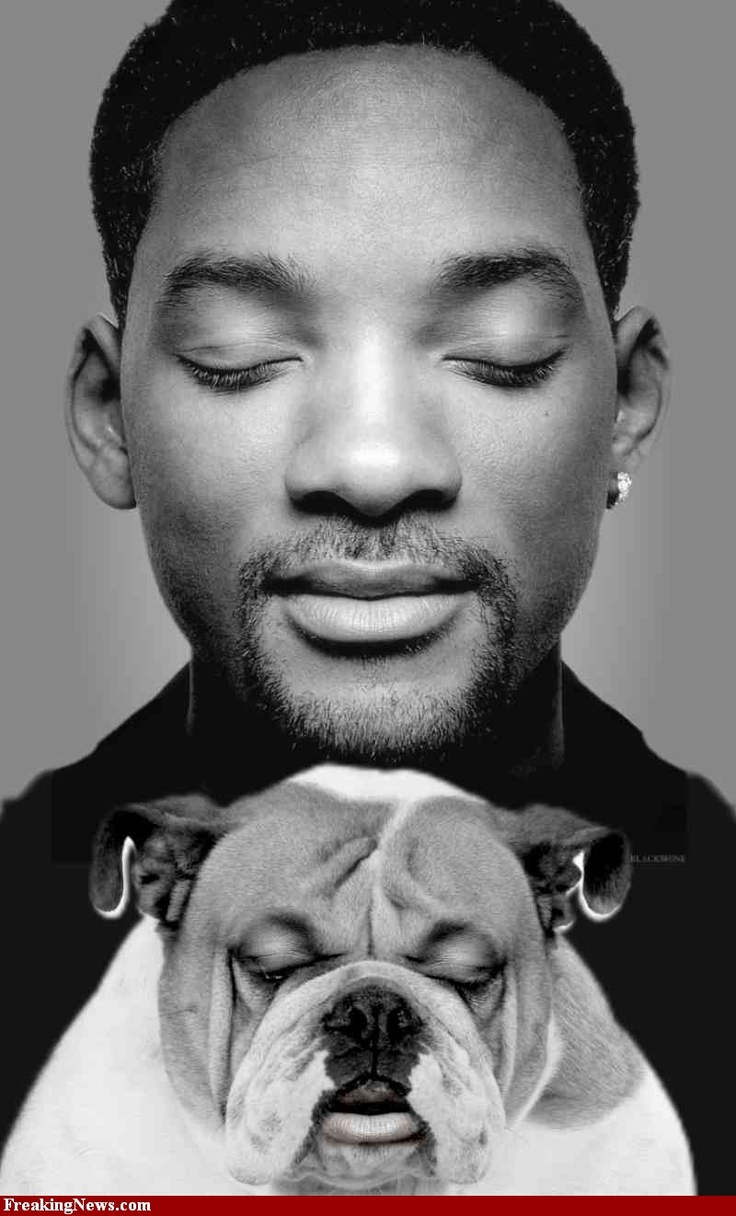Famous people (Will Smith) + Dogs Four Paws