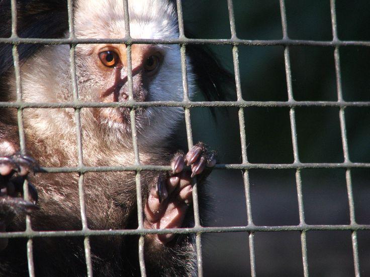 End of October 2012, Zoo Rheine, Germany