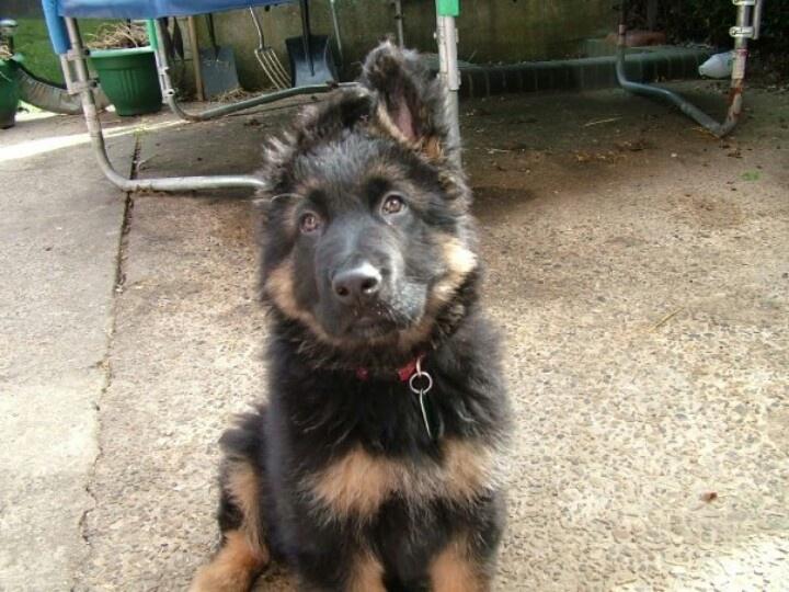 Rosco puppy