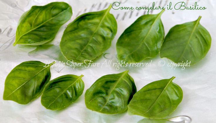 Congelare il basilico fresco è possibile. Metodo facile per conservare il basilico che ci permetterà di godere del suo inconfondibile aroma anche in inverno