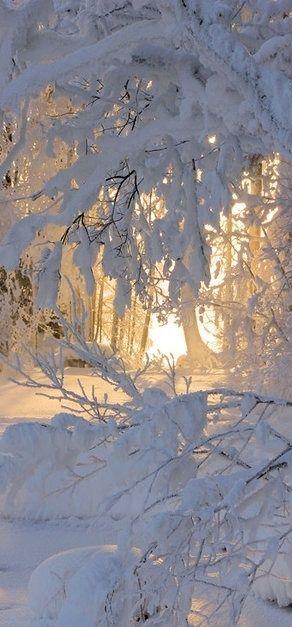 À travers cette beauté enneigée , on croirait sentir l'air pur de la neige au repos qui se laisse caresser par la lumière du jour.