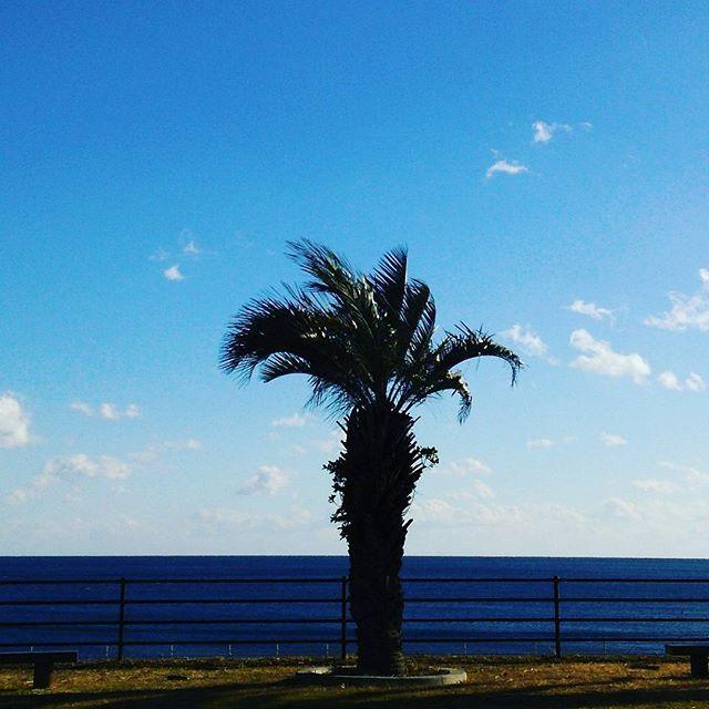 【pikkari14】さんのInstagramをピンしています。 《#今日 は#天気よかった ~😊 #暖かい #1日 やったね~#青い空 #青い海#白い雲 #シュロの木#海#風 #空#風景#景色#noon #daytime #palm #palmtrees #bluesky #bluesea #landscape#scenery#Japan》