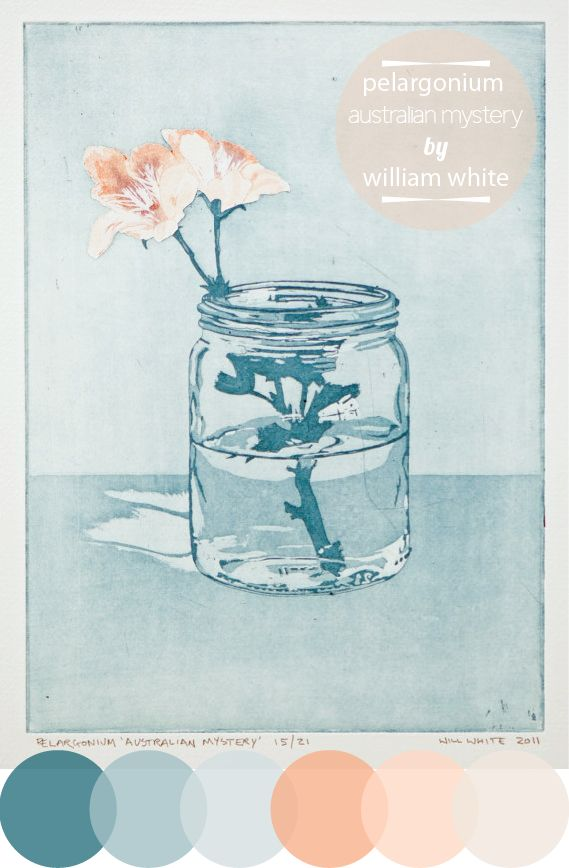 color inspirationPelargonium Australian, Australian Mysteries, Williams White, Color Inspiration, Art Inspiration, Etchings, White Art, Prints, Colors Inspiration