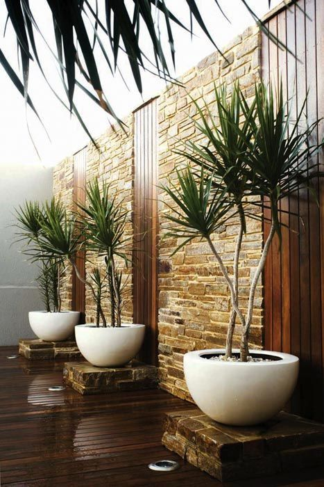 trends - woody plants in containers....A great entry pathway that would lead to the backyard. Could build it up in nice wood.