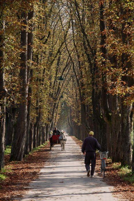 Autumn in Sarajevo, Bosnia & Herzegovina Copyright: Coskun Tezic