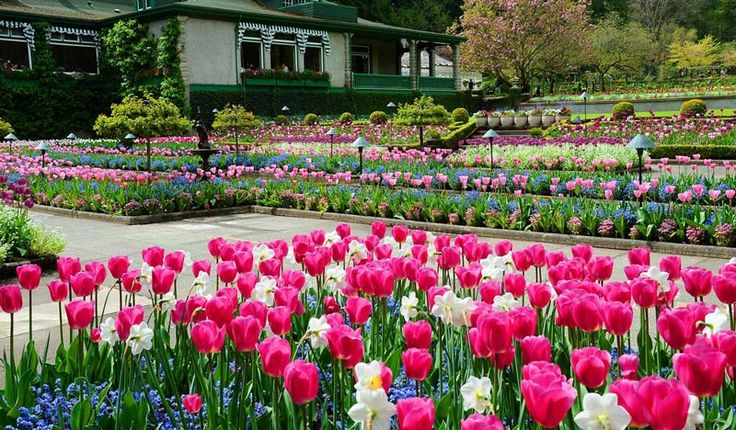 花园相册-布查特花园(The Butchart gardens)世界著名的第二大花园 #布查特花园 #花园