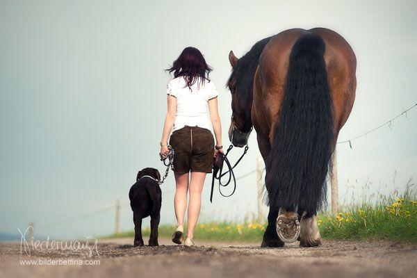 Pferde & andere Tiere - Pferdefotografie, Hundefotografie, Fotografie Bettina Niedermayr Pferde - Mensch & Pferd - Hunde- Portrait - Stallschilder - Kalender, Pferdekalender, Haflingerkalender mit Kohlfuchs Liz. Steiermark