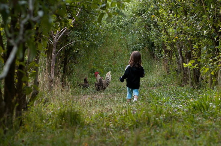 James D's #Hooroo #SecretSpot is #ClearviewFarm in #Ferndale. A surprising good farm stay. Great organic farm produce from its orchard and farm animals. It has a proper restaurant for guests; the farmer is also a chef. The farm animals roam free which the children love.